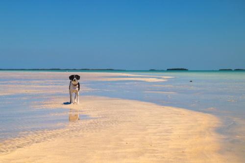 dog-on-beach-in-key-west
