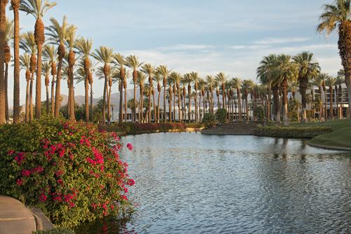 palm-springs-palm-trees