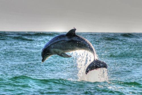 dolphin-st-andrews-park-panama-city-beach