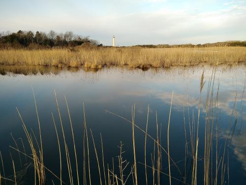 cape-may-marsh
