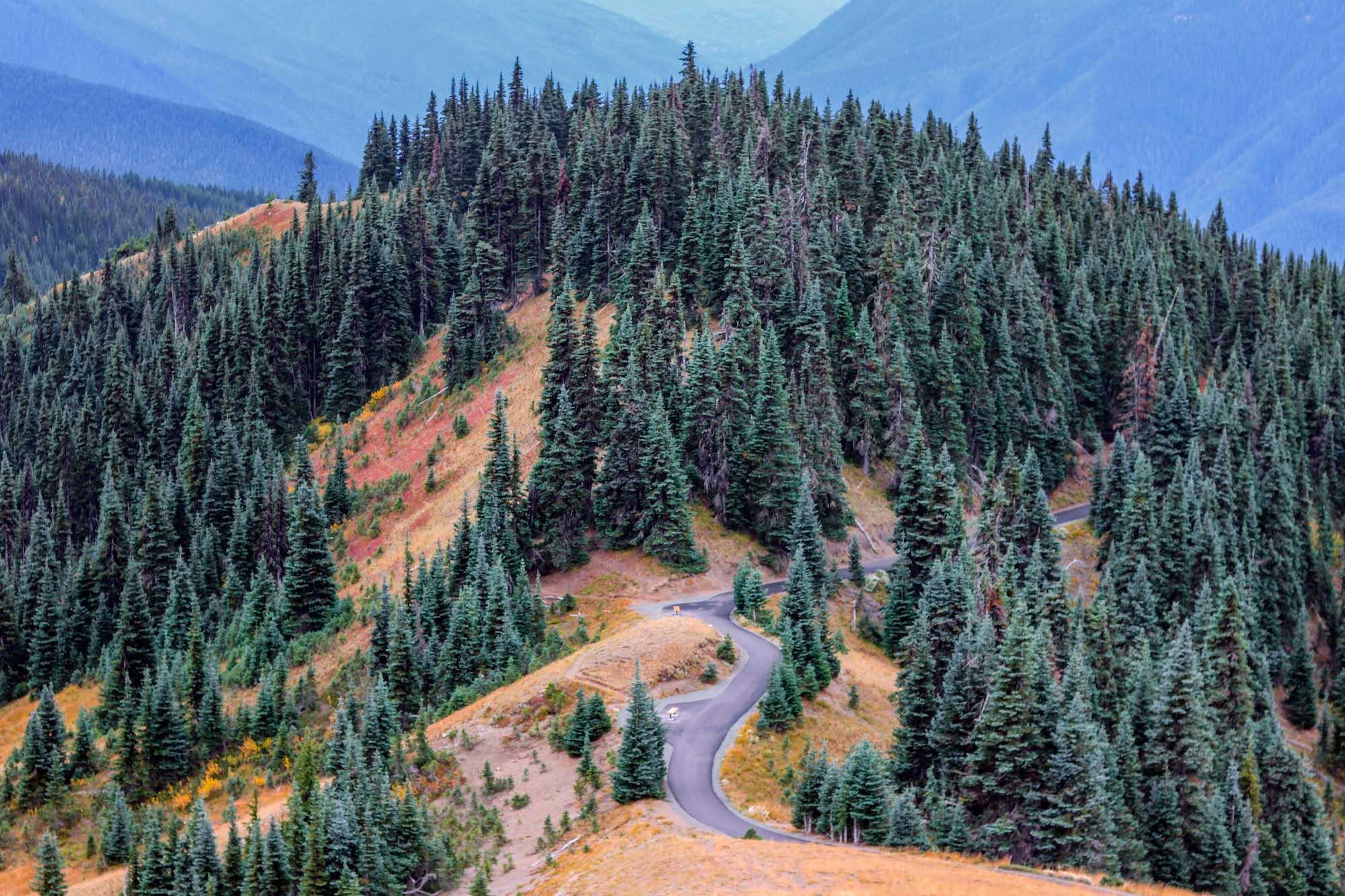 hurricane-ridge-and-hoh-rain-forest