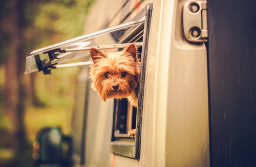 dog-peeking-out-rv