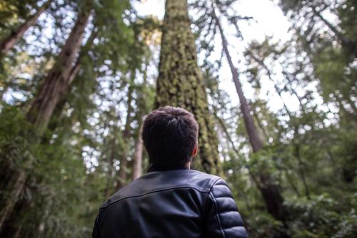 man-in-muir-woods